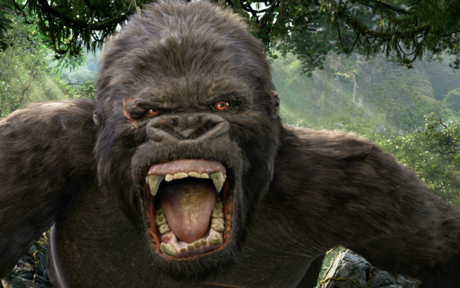 kong-featured-900x563