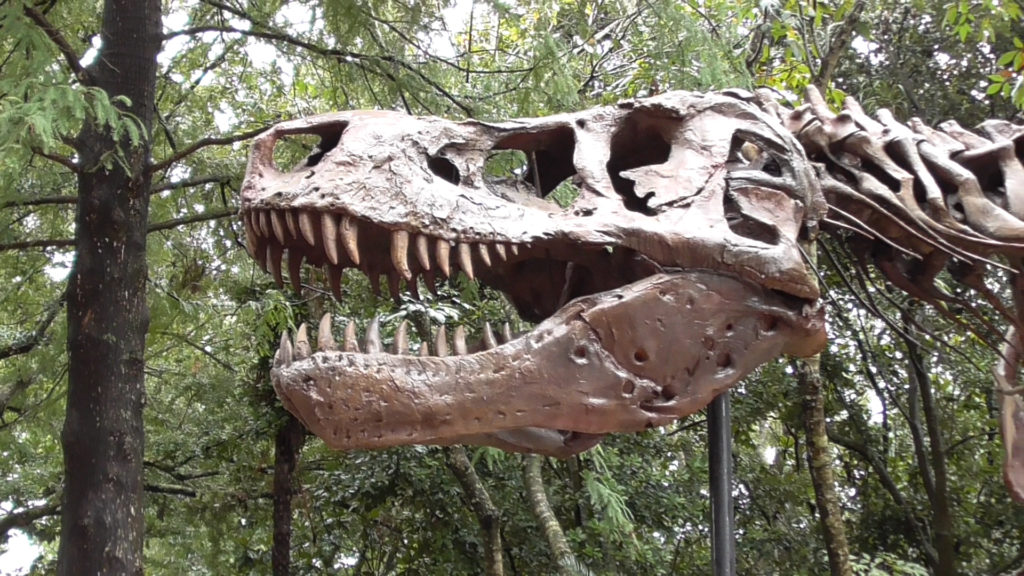 Quick look at Sue, the most complete T-Rex skeleton ever found, before we head out