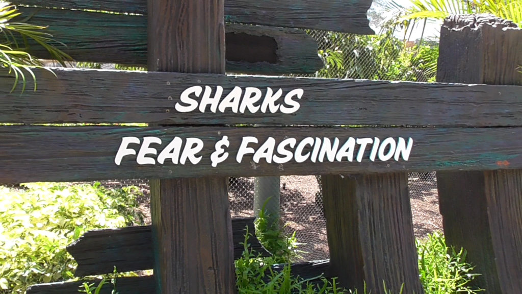 Learn all about Sharks: Fear & Fascination