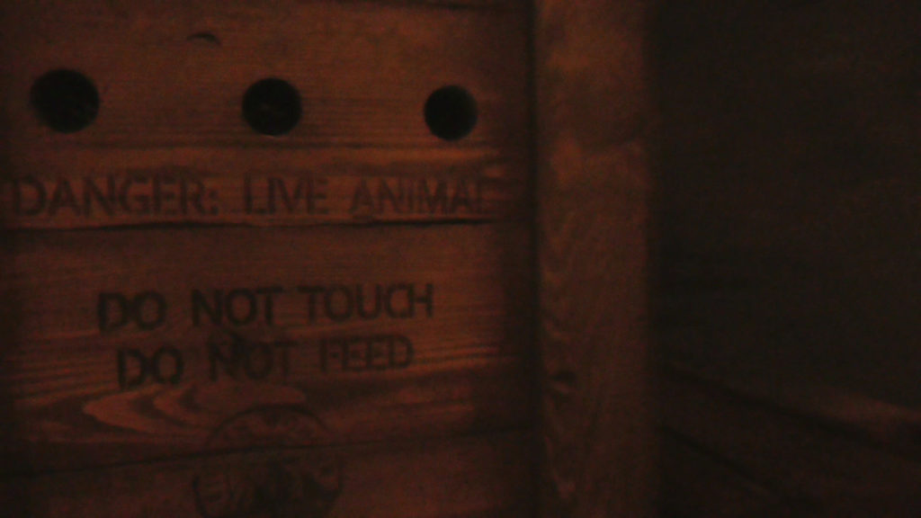 """Live Animal"" in box. Makes noise as you pass by"