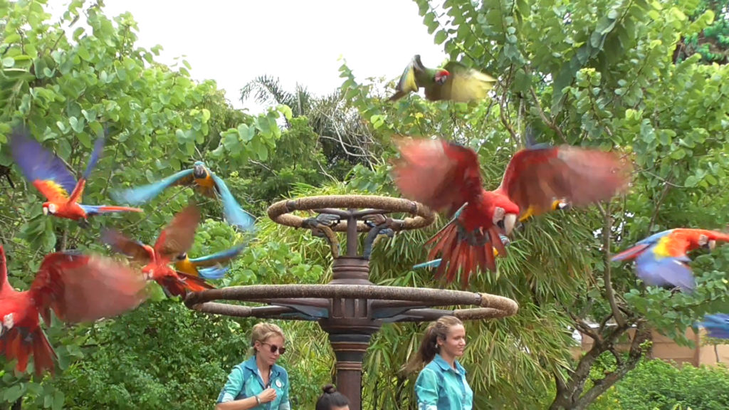 Flying Macaws! Check out the macaw video here!