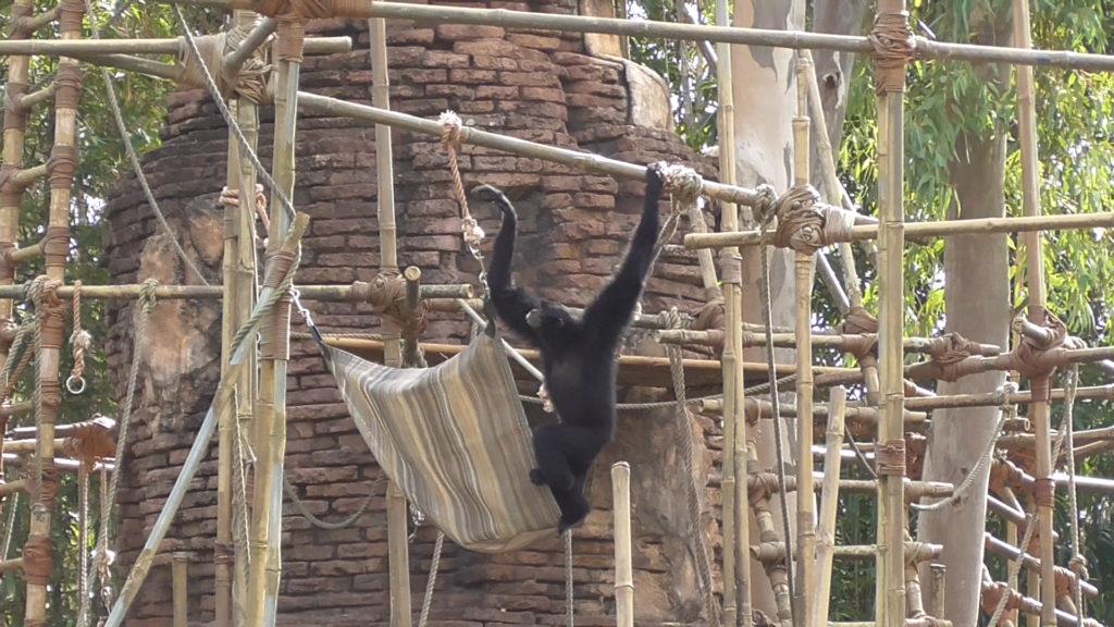 A happy monkey!